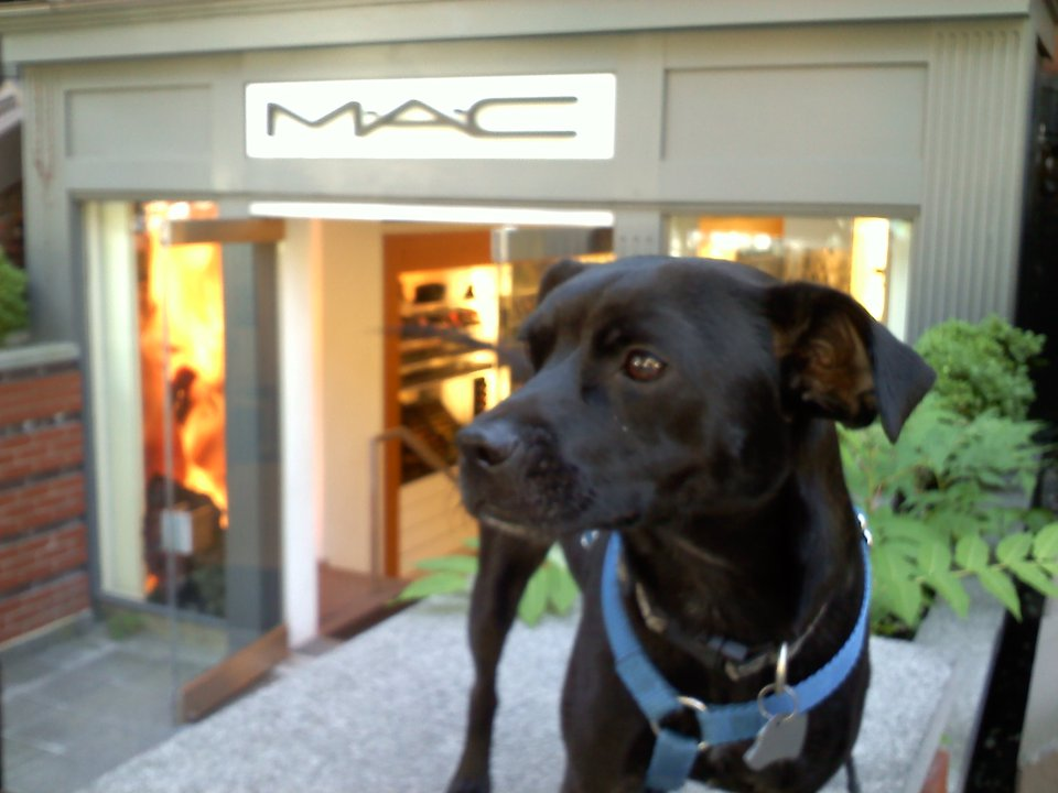 Small dog standing in front of MAC Cosmetics on Newbury Street